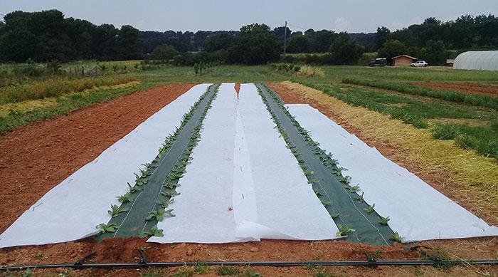 ferme semencière bio - AGROSEMENS