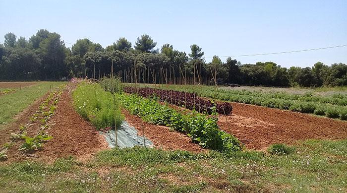 Vue générale des planches Ferme semencière AGROSEMENS