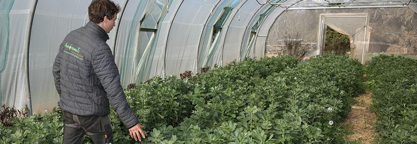 ferme semenciere bio - AGROSEMENS - engrais vert
