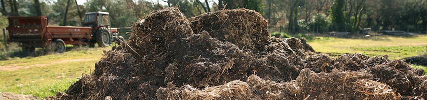 ferme semenciere bio - AGROSEMENS