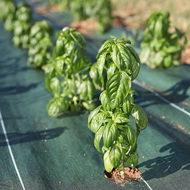 ferme semenciere - bache - AGROSEMENS