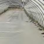 ferme semenciere - solarisation desherbage- AGROSEMENS