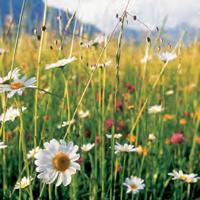 melange altitude semences bio agrosemens